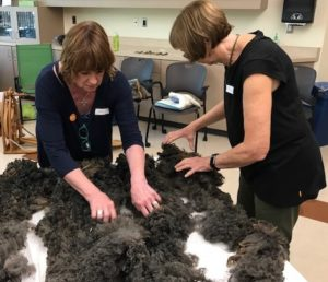 Students inspecting a raw fleece